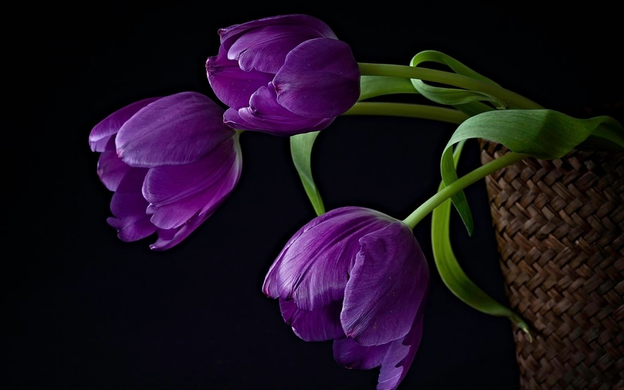композиция, Тюльпаны, цветы, корзина