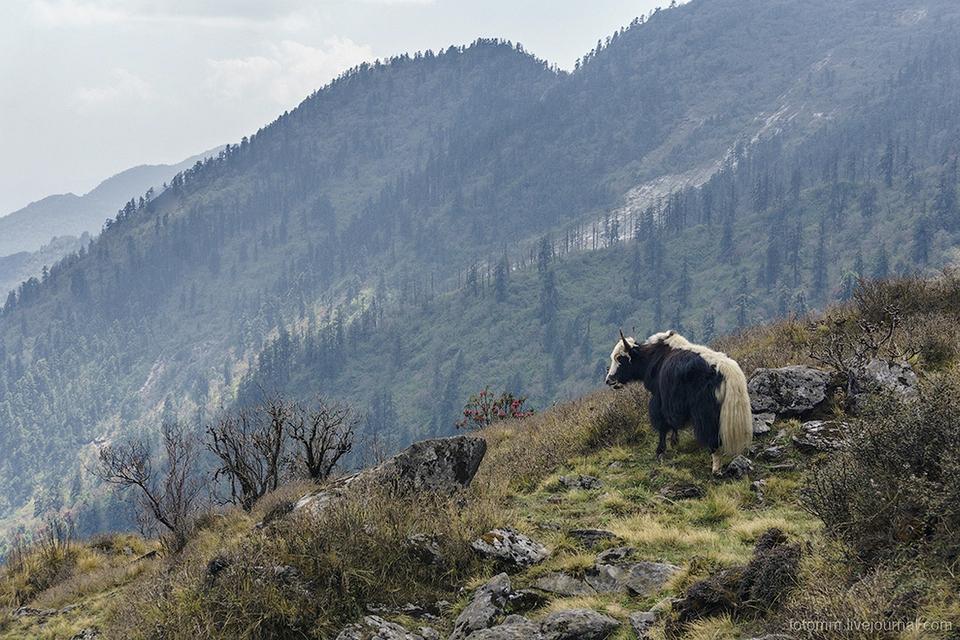Непал: райские кущи наедине …