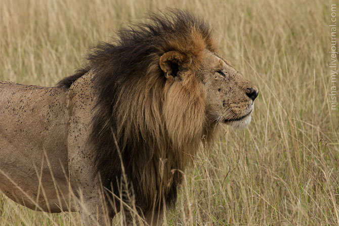 Путешествие по самому известному заповеднику в Кении