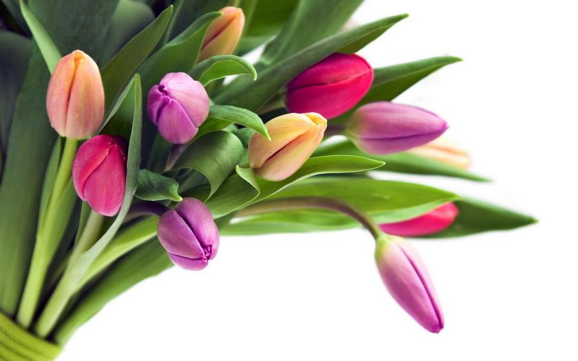 букет, тюльпаны, цветы