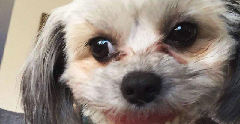 Почему не стоит оставлять зубные протезы там, где до них может добраться собака