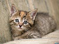 Кошки и Котята 78
