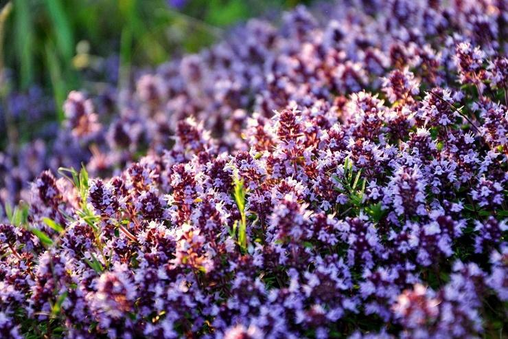 Самые полезные травы для заваривания чая