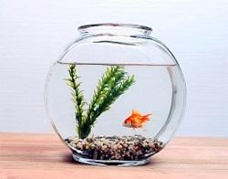 Как правильно выбирать аквариумных рыбок
