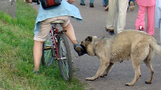 Что делать, если на вас нападет собака