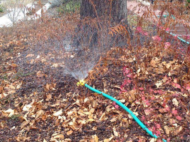 Полив деревьев осенью