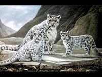 Белые тигры 25