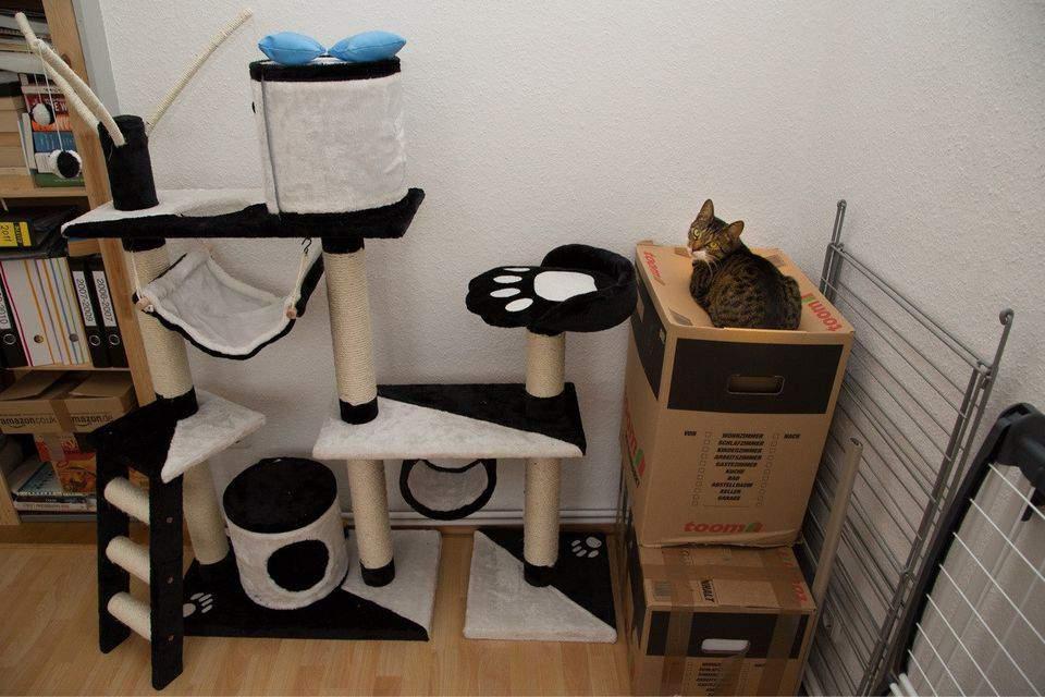 Картинки по запросу кошачья логика