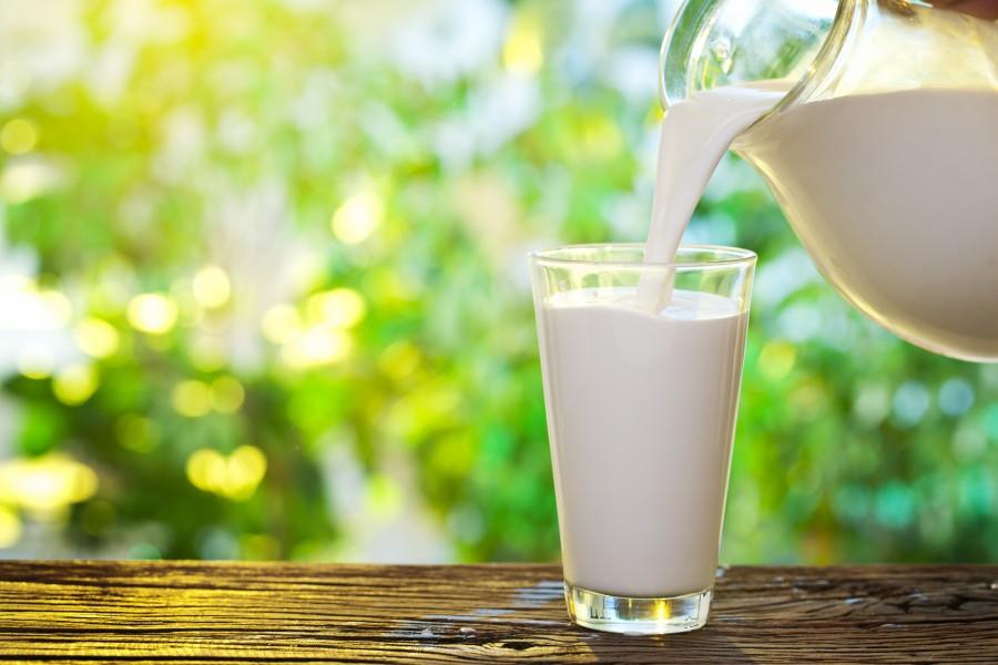Чем полезно молоко от разных домашних животных