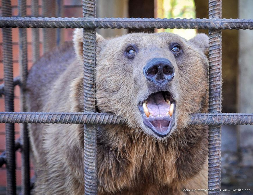 Беспредел в Сочи: и снова про несчастных медведей в ужасном зоопарке