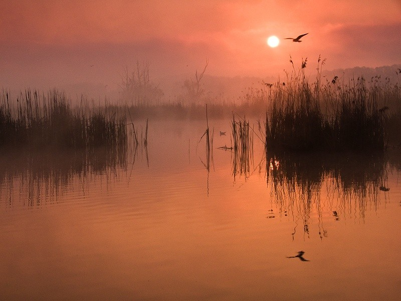 Фотография Flying over the Pond автор Jan Bainar на 500px