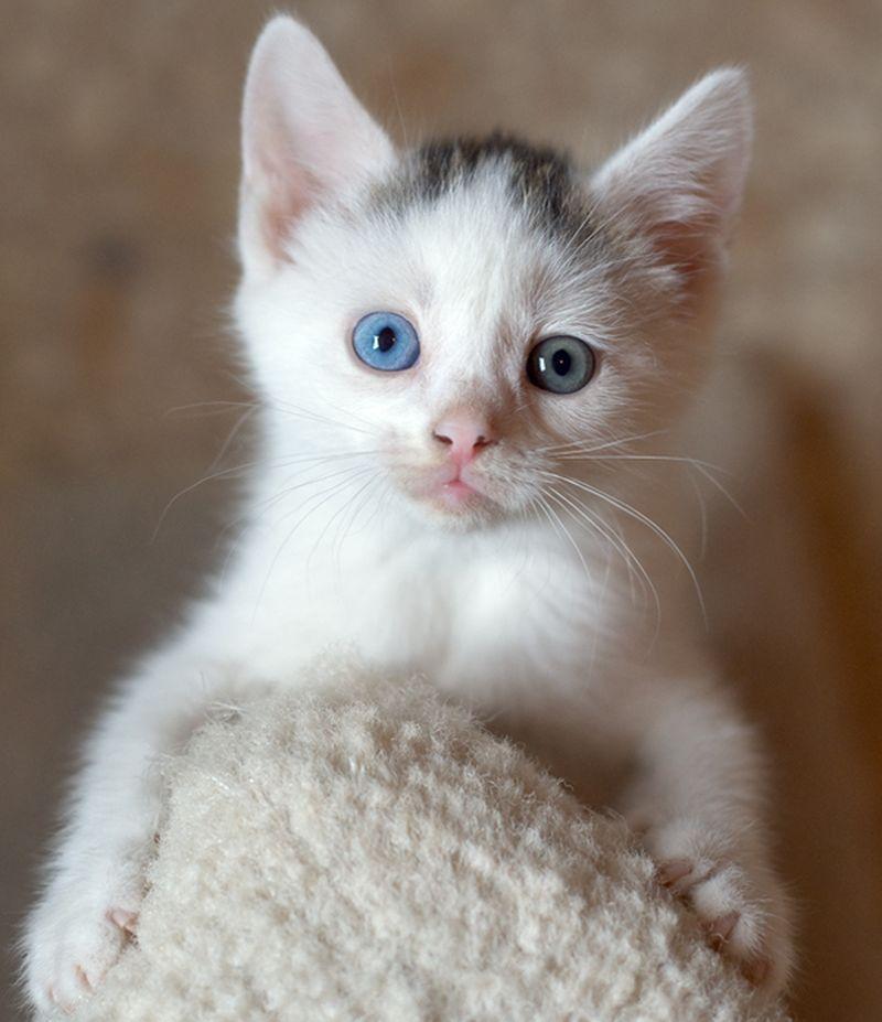 Heterochromia31 Разноглазые кошки