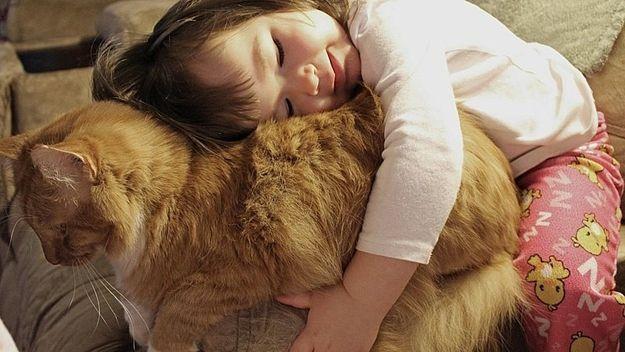животные, кошки, дети