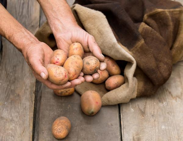Перебираем картофель