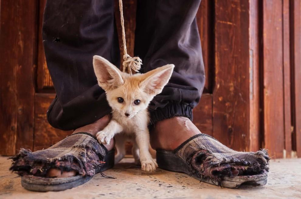 Самые интересные фотографии животного мира из разных уголков мира
