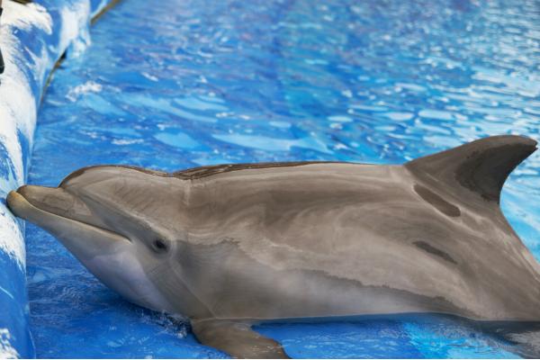 В Испании туристы ради селфи до смерти замучили детеныша дельфина