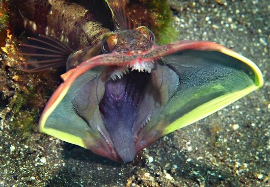 ТЕРЕМОК. Странные и опасные обитатели морей