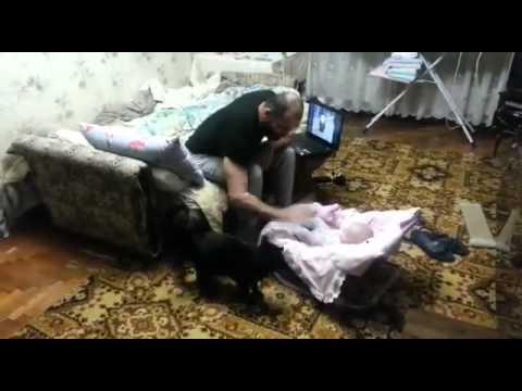 Отец ругал малыша, когда внезапно появился кот