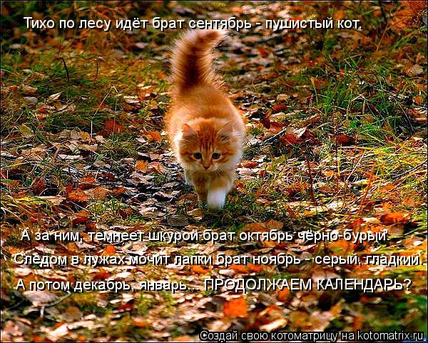 Котоматрица: Тихо по лесу идёт брат сентябрь - пушистый кот. А за ним, темнеет шкурой брат октябрь чёрно-бурый. Следом в лужах мочит лапки брат ноябрь - сер