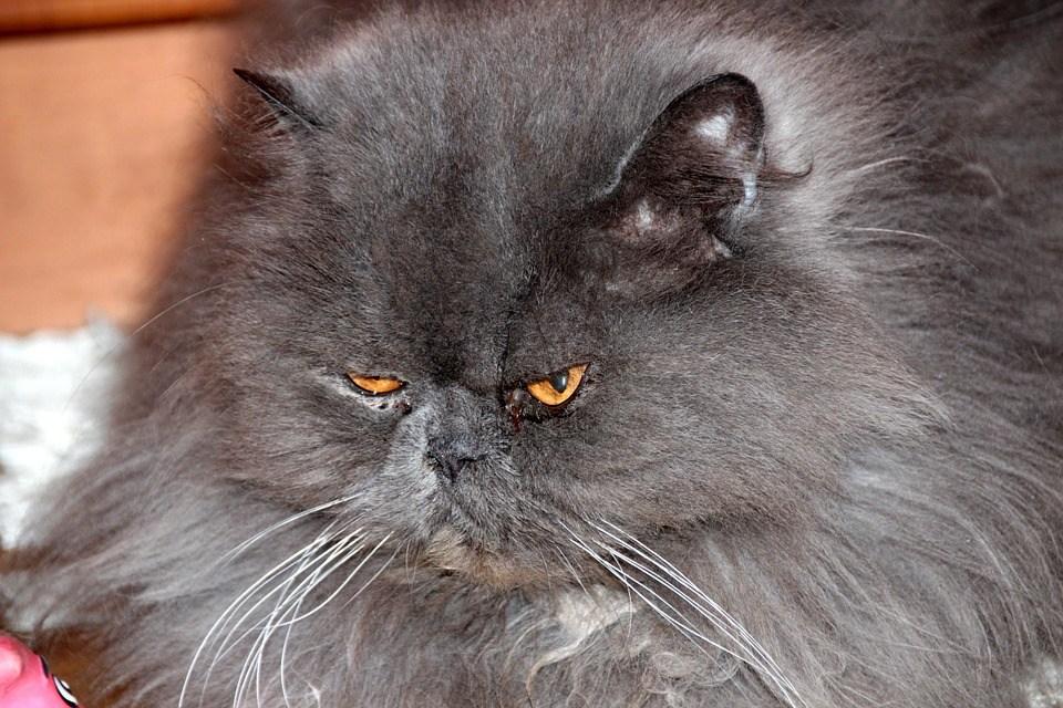 Домашний кот держал в страхе целую семью