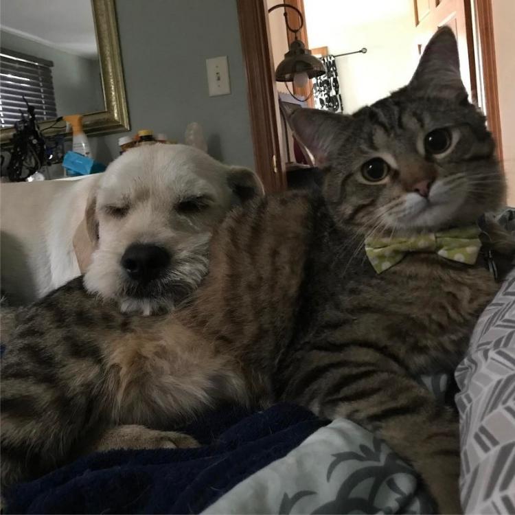 Этот котенок-инвалид обрел нежного друга по прозвищу «Мистер Мама»