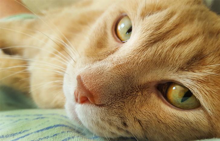 Мне все чаще кажется, что наша кошка понимает человеческую речь