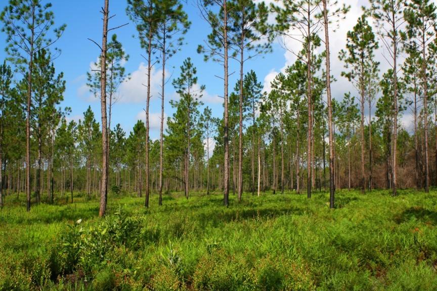 Этот человек высадил 8 млн деревьев и восстановил лес, вырубленный 100 лет назад