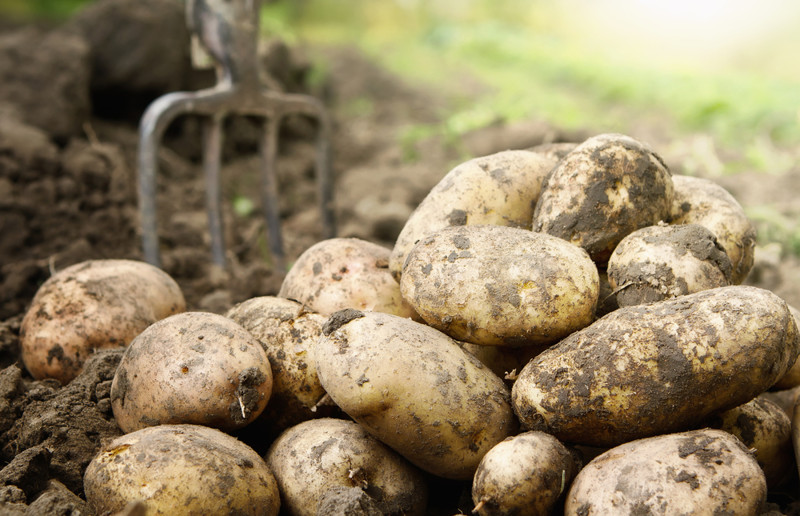 Интересное о картофеле