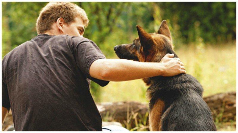 3. Прогулки Любовь, животные, ревность, собака