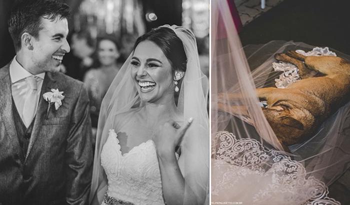 Непрошеный гость: Как бродячая собака чуть окончательно не испортила бразильскую свадьбу