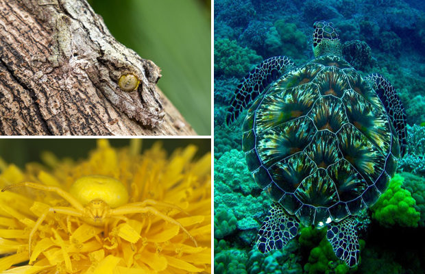 Маскировка в мире живой природы
