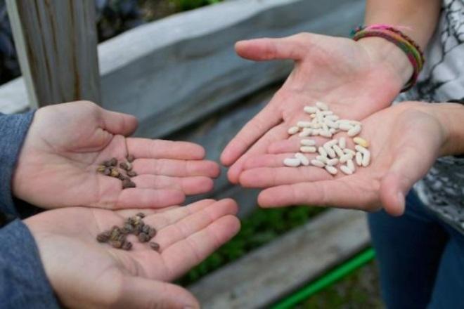 обмен семян