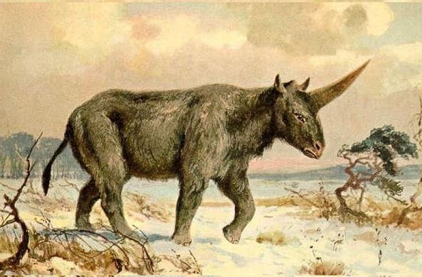 Археологи нашли сибирского единорога