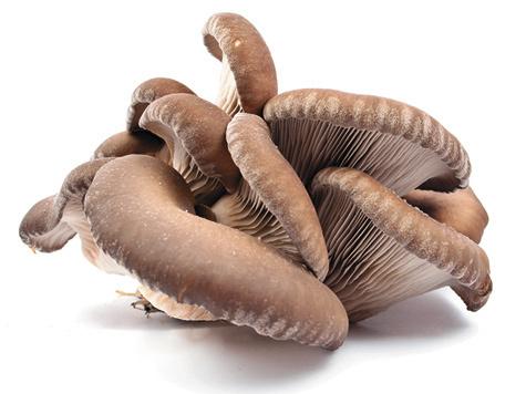 Как насобирать грибов зимой