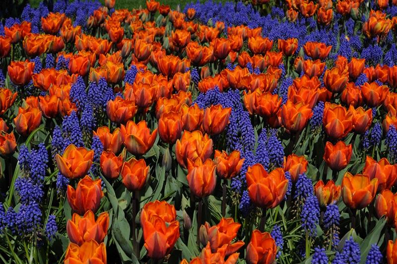 Посадка луковичных цветов необычным способом