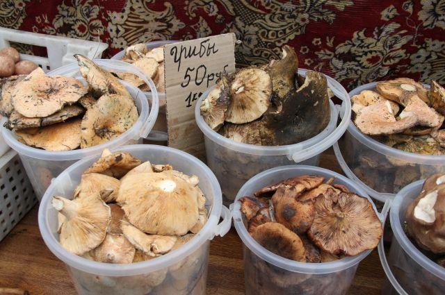 Можно ли отравиться съедобными грибами?