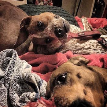 Новая оптическая иллюзия с собакой взбудоражила соцсети