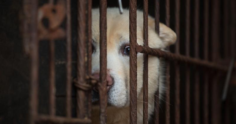 Тайвань стал первой азиатской страной, официально запретившей употребление в пищу кошек и собак