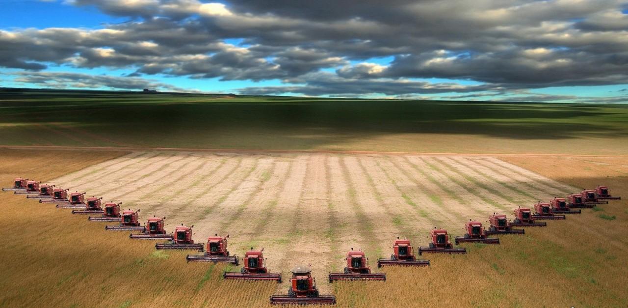 Россия-кормилица: экспорт пшеницы в 2016 вырос на 26%