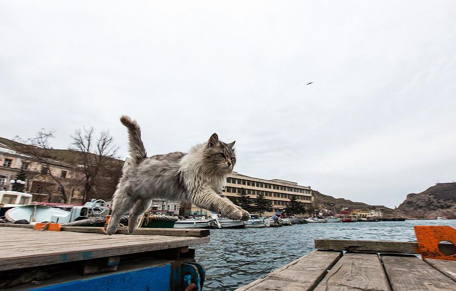 Бедные, голодающие коты Балаклавы балаклава, интересное, коты, юмор