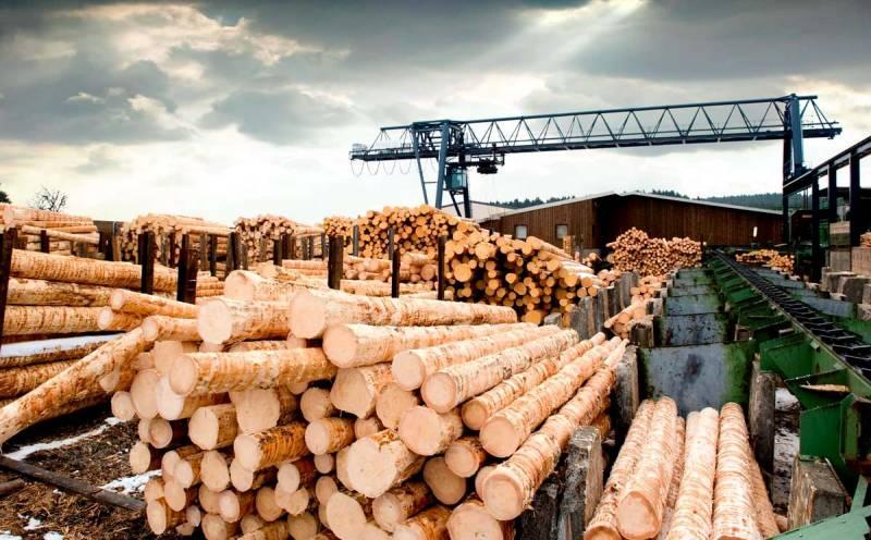 Китай ворует российский лес: как это предотвратить?