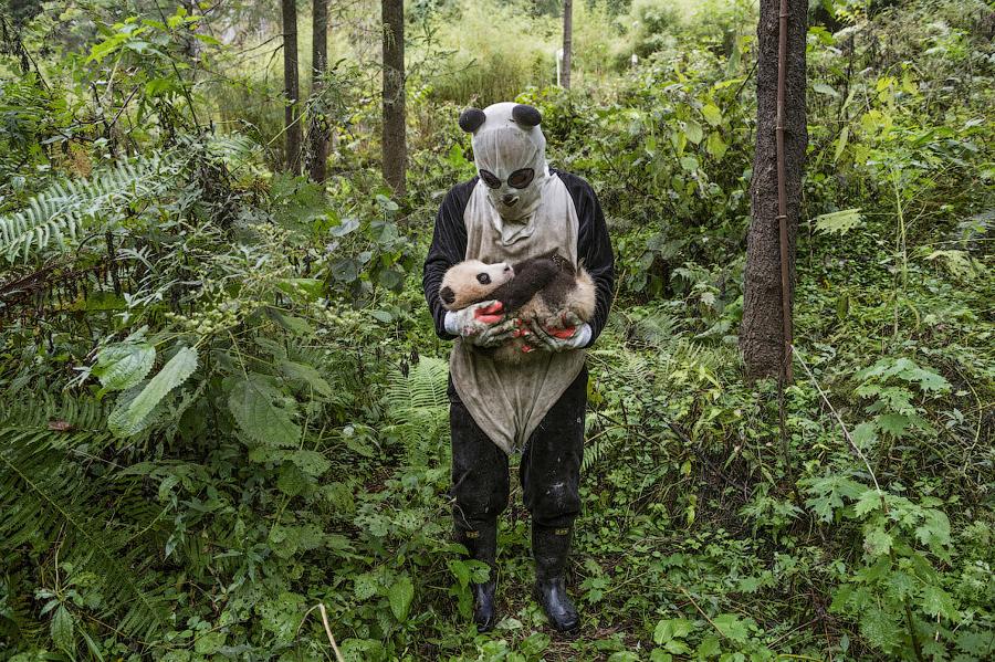 Ролевые игры в костюмах панды