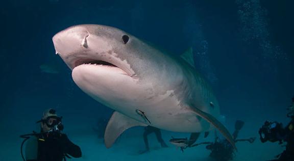 Ученые выяснили, где акулы чаще всего нападают на людей