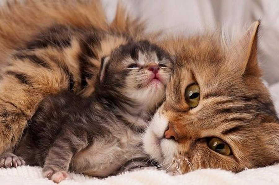 Онажемать и котята…