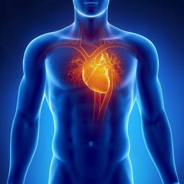 Что предотвратит сердечно–соудистые заболевания