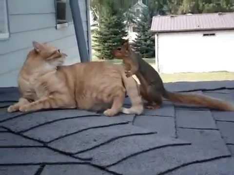 Необычная парочка — кот и белка — удивили всех!