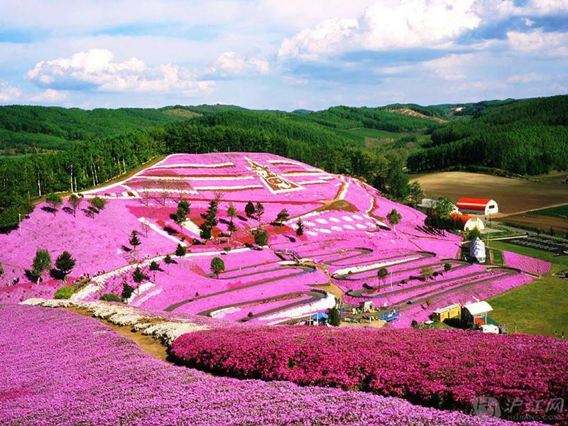 Парк Такиноуэ с цветами щибазакура (розовый Мосс), Япония красивые места, красота, невероятные места, фото