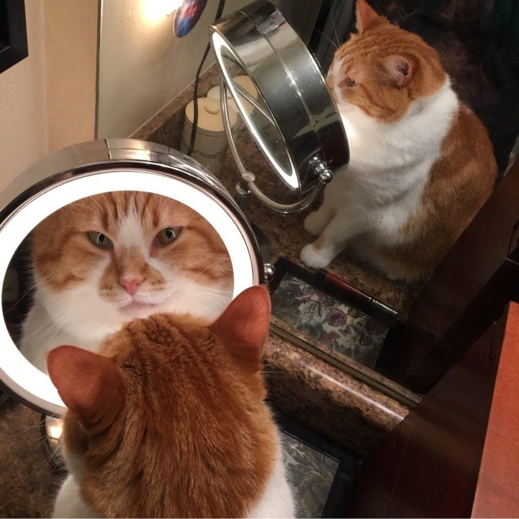 За что мы так любим котов? Да все просто — они удивительные!))