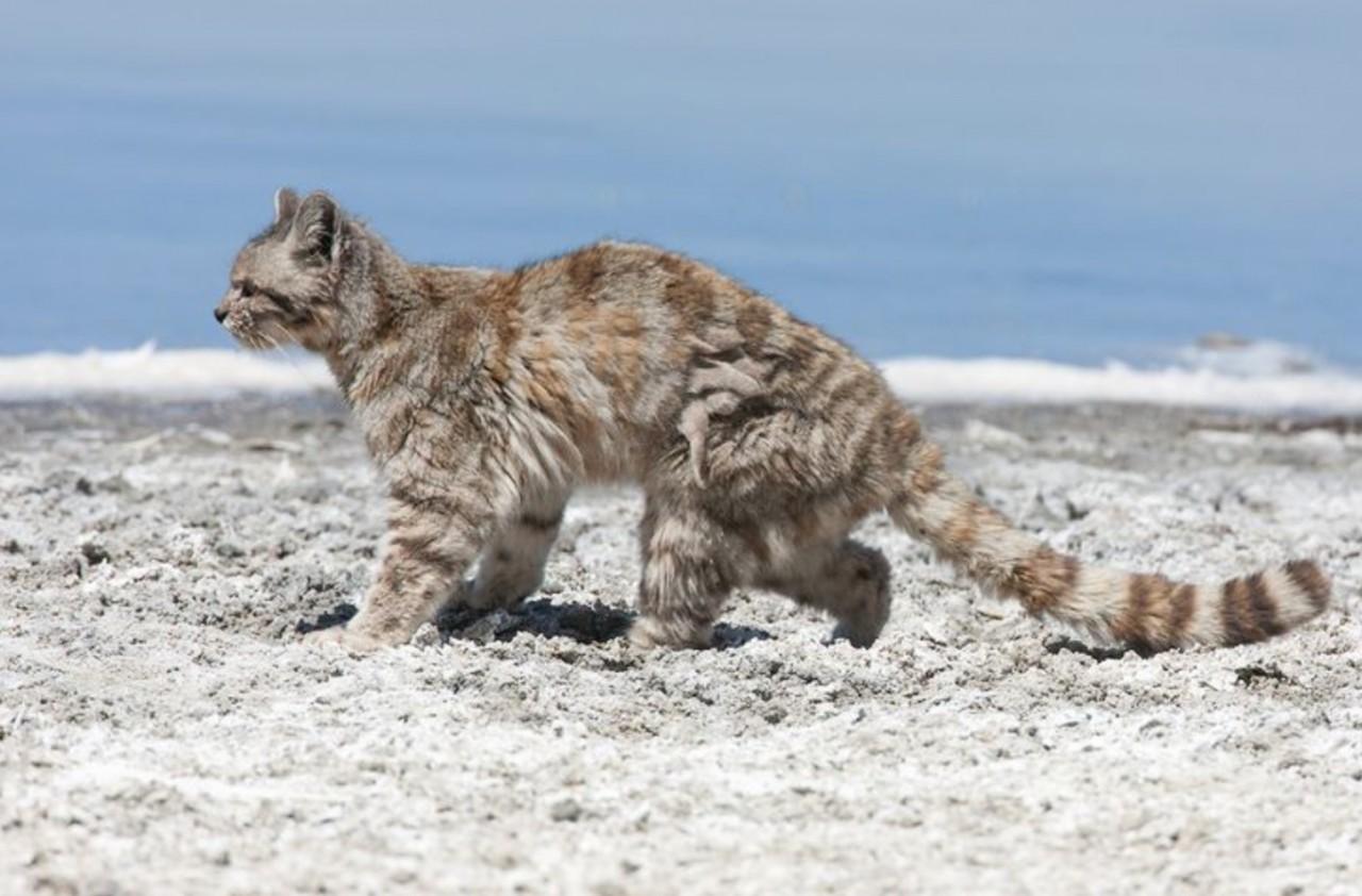 Кошка, о который мы почти ни…