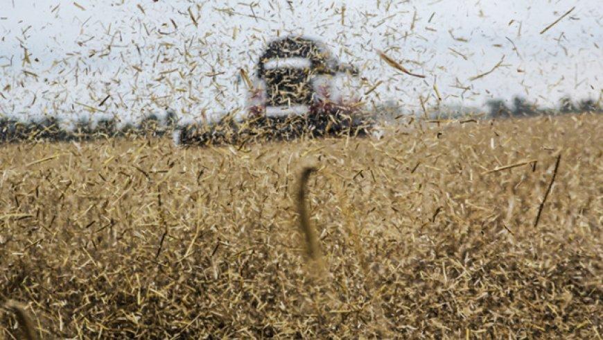 Bloomberg: Россия напоминает о величии СССР – она завоевала «пшеничную корону»